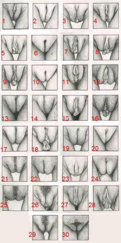 таблица пелоток