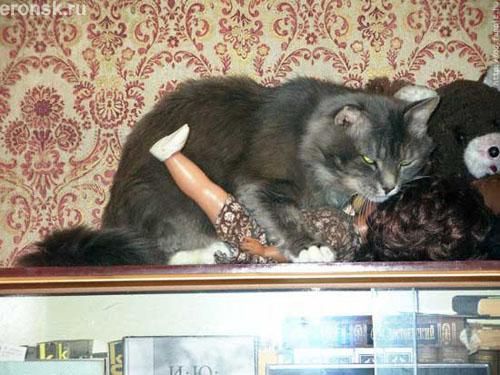 кот мачо