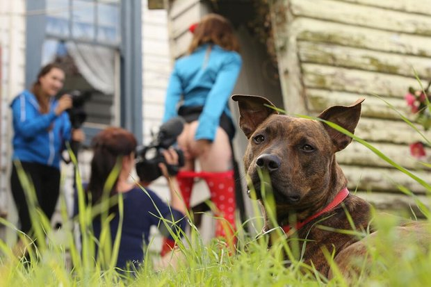 собака - маскот порно студии girlsoutwest